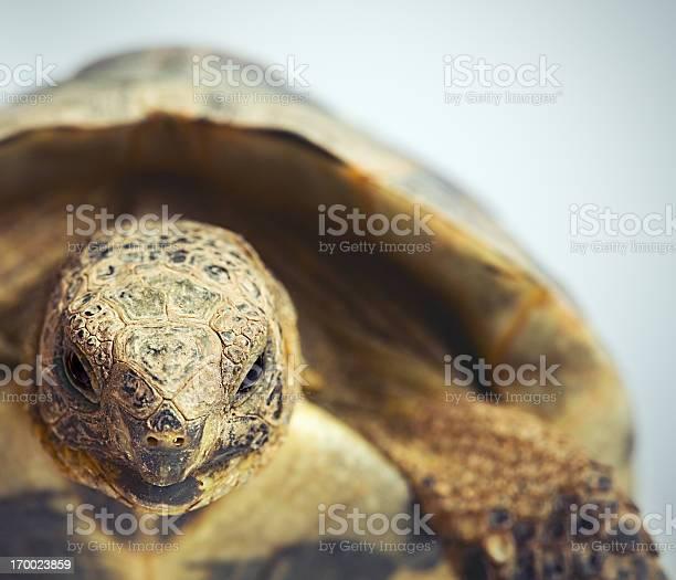 Tortoise portrait picture id170023859?b=1&k=6&m=170023859&s=612x612&h=efwnj4mrhx79iwfvlnrqbatkhojtgcm7pnir6bpkmzo=
