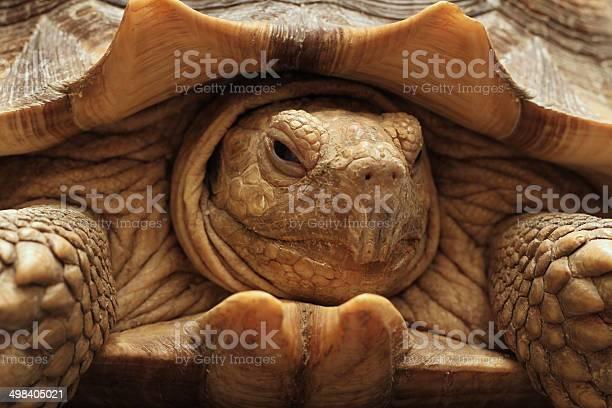 Tortoise portrait picture id498405021?b=1&k=6&m=498405021&s=612x612&h=en07xfe5ibal2skodrz tv2ryesbypebgfi02voe2ay=