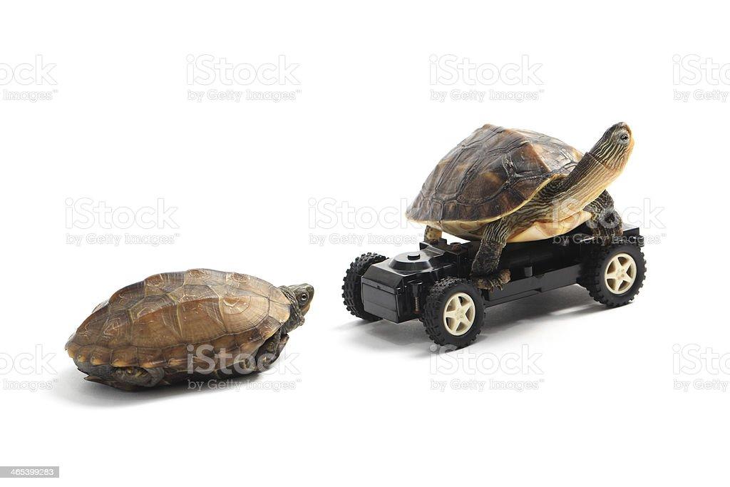 Tortoise Race stock photo