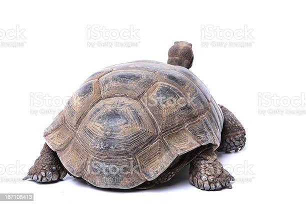 Tortoise rear end picture id187108413?b=1&k=6&m=187108413&s=612x612&h=jau ysiiefuufcyjbspq09x9iscdzhbowqauj45smvq=