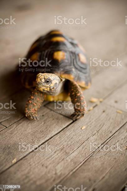 Tortoise series picture id172660979?b=1&k=6&m=172660979&s=612x612&h=v0zhw7zmj19d 00e3hfm0ujuwxkcoknfkt1wk2ajpdu=