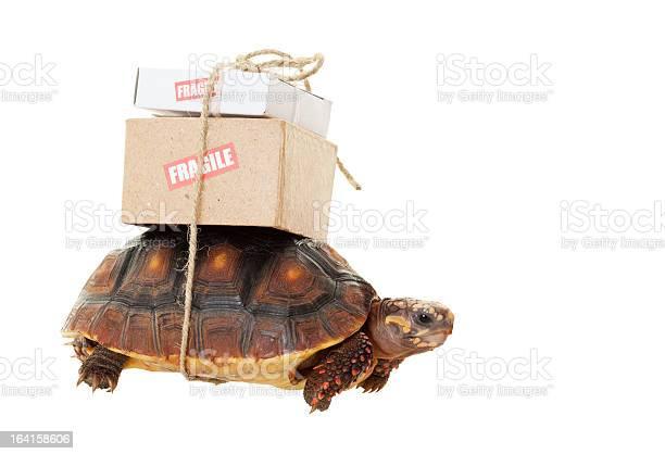 Tortoise slow mail picture id164158606?b=1&k=6&m=164158606&s=612x612&h=vdirvw498idor4ewi8jmpw3hgsr0jbcdsqtmbceuouo=