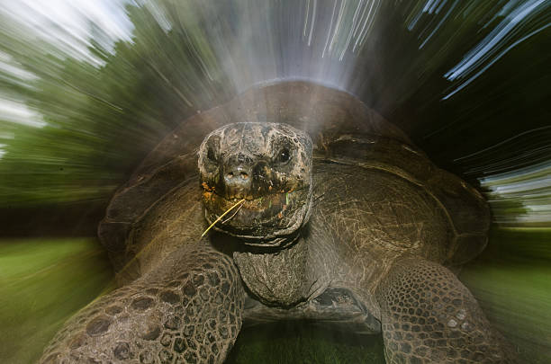 Tortoise speed stock photo