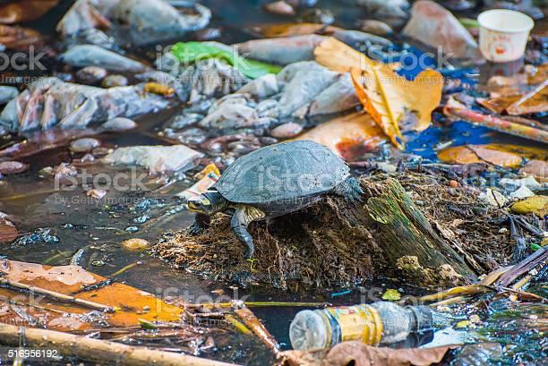 Tortoise surrounded by polluted water picture id516956192?b=1&k=6&m=516956192&s=612x612&h=jtdjx40 2mqaaalcu3koal2hvlsz2nphg1tkngay1bs=