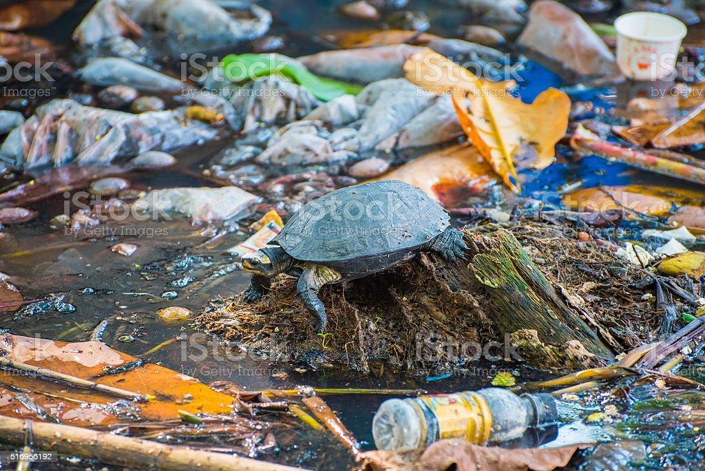 Schildkröte umgeben von schmutzig Wasser – Foto
