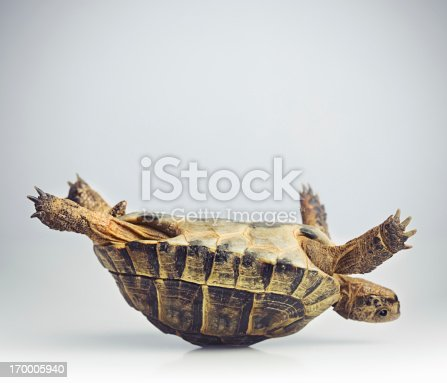 istock Tortoise upside down 170005940