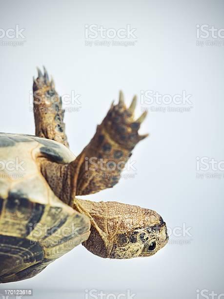 Tortoise upside down picture id170123618?b=1&k=6&m=170123618&s=612x612&h=r0sh9f jddjxe113irtpzg23oo25rffjjccamxwq97q=