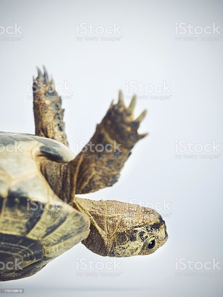 Tortoise upside down stock photo