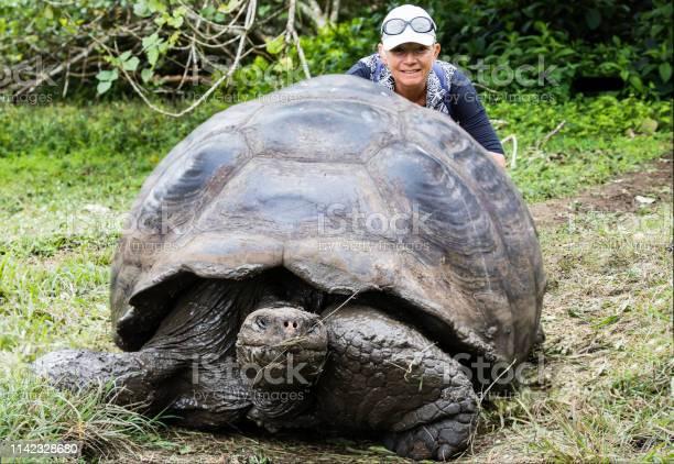 Tortoise with a woman picture id1142328680?b=1&k=6&m=1142328680&s=612x612&h=8tmosemur0cfo3vjgwvmlilv2txol2hbo5xm6lrcokg=