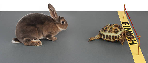 Tortue-hare - Photo