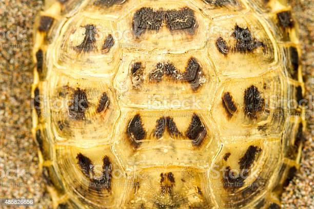 Tortoiseshell picture id485826656?b=1&k=6&m=485826656&s=612x612&h=3fdu8godnzcoq5vzcmdg h2xlxejixfw7xeyhxuato4=