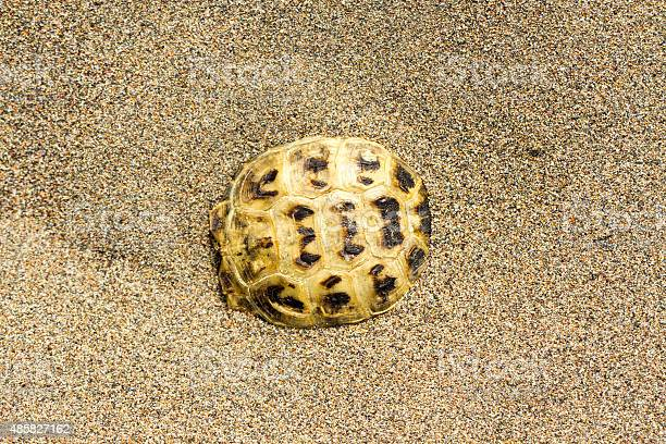 Tortoiseshell picture id485827162?b=1&k=6&m=485827162&s=612x612&h=2skgxn xb1wwguaxh3jiw2dbp4lwz lskimexrinprm=
