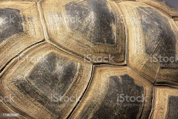 Tortoiseshell turtle exoskeleton picture id174625092?b=1&k=6&m=174625092&s=612x612&h=0ezajwcdmdxvfcawcpfdfwkgsn1v4167lpkscit57xs=