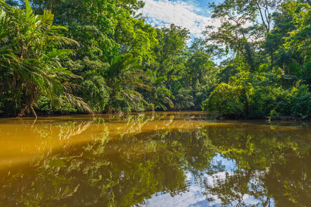 Tortuguero canal in Costa Rica Canal in the national park of Tortuguero with its tropical rainforest along the Caribbean Coast of Costa Rica, Central America. limoen stock pictures, royalty-free photos & images