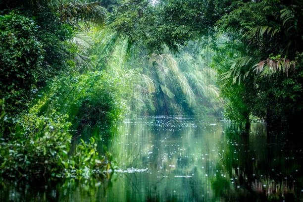 Tortuguero, Costa Rica. Rainforest Tortuguero, Costa Rica. Rainforest with ray of light and vegetation, morning through the canals. limoen stock pictures, royalty-free photos & images