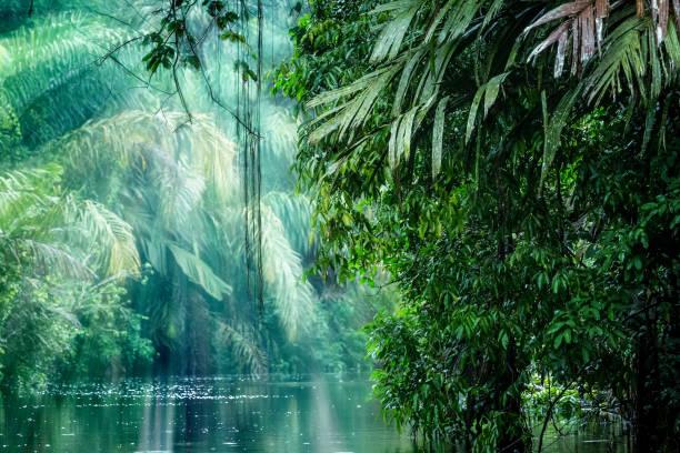Tortuguero, Costa Rica. Rainforest stock photo