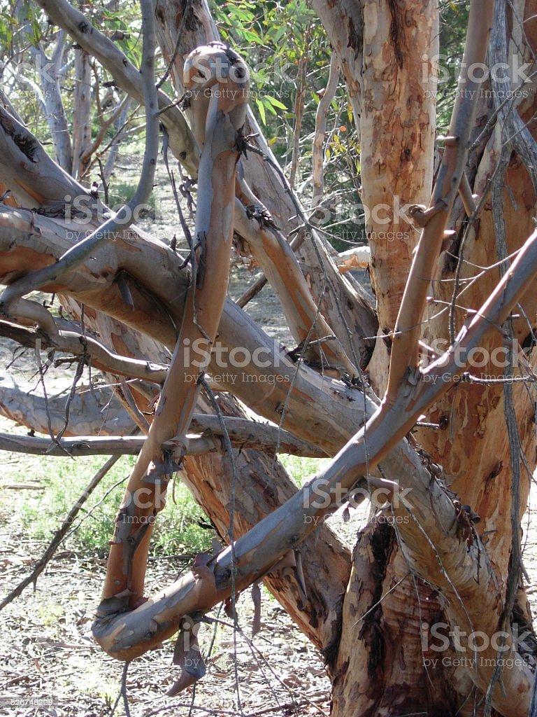 Tortured growth pattern of a tree limb stock photo