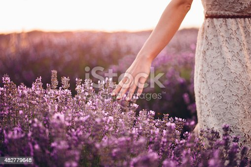 Photo of woman's hand touching the lavender flowers
