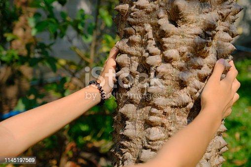 Touch the sharp spines of Bombax ceiba tree
