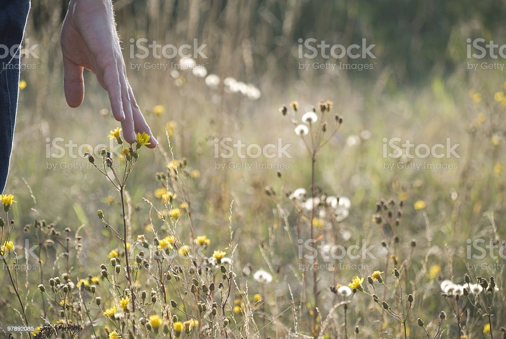 Touching a flower royalty-free stock photo