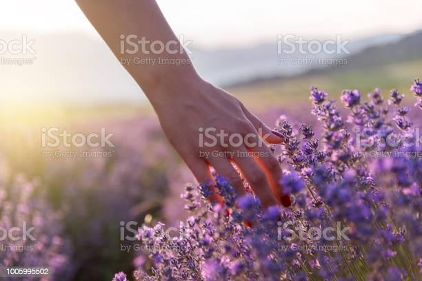 Touching the lavender picture id1005995502?b=1&k=6&m=1005995502&s=612x612&h=lipwju7lfxtanh8iqpe9y1g9achut8sztiiaqcpceh0=