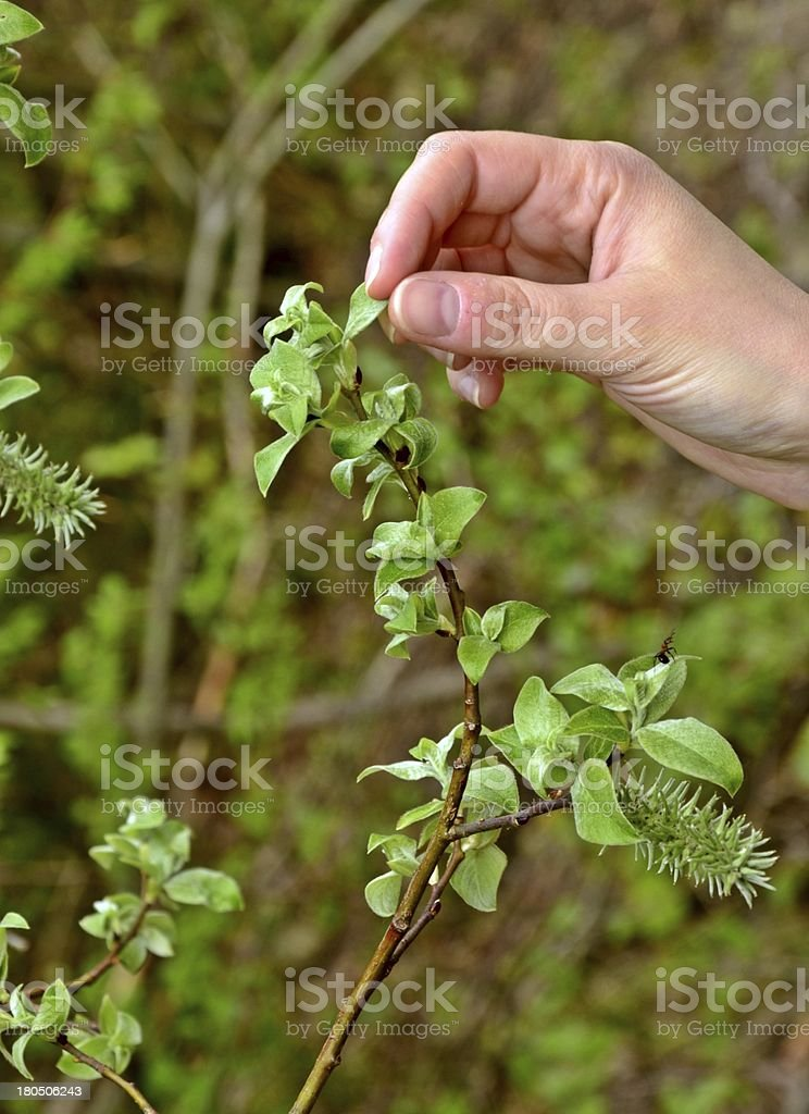 Touching the leaves stock photo