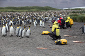 Salisbury Plains, South Georgia and Sandwich Islands, March, 2018: Penguins, Tourists and Guides taking photos a a huge king penguin colony.
