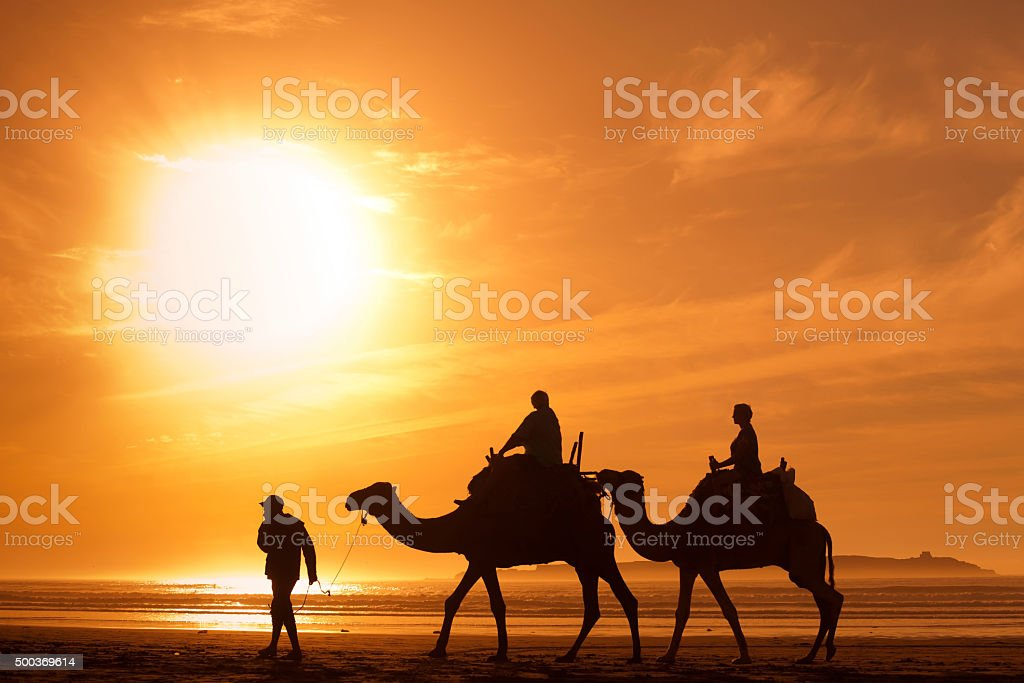 tourism in Africa, people tourists riding camels on the beach stock photo