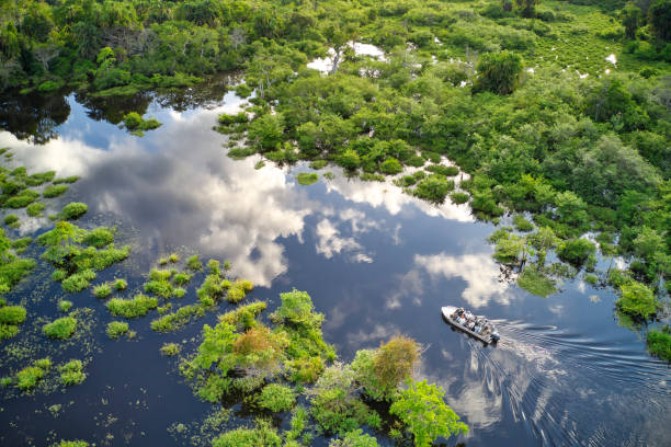 Tourist boat on a jungle river in the rainforest of the Congo Basin stock photo