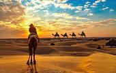 Camel isolated on white.