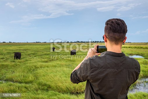 Tourist watches and films a herd of elephants with a smartphone in Chobe National Park, Botswana.