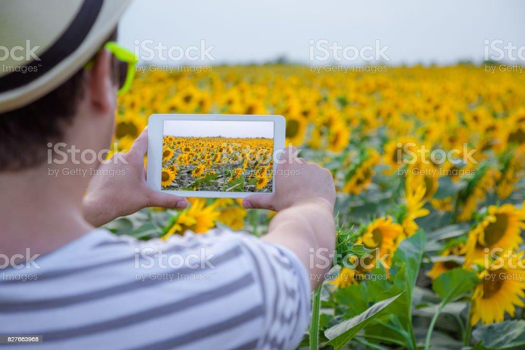 Tourist guy taking photo of sunflowers