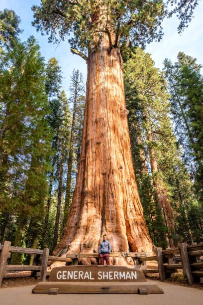 Tourist im Sequoia National Park – Foto