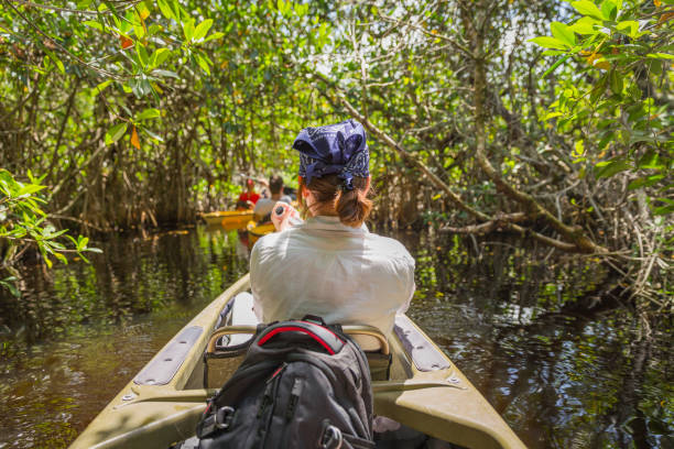 Tourist kayaking in mangrove forest in Everglades Florida, USA stock photo