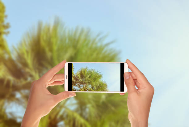 tourist makes a photo of green palm trees in sunshine - hand holding phone zdjęcia i obrazy z banku zdjęć