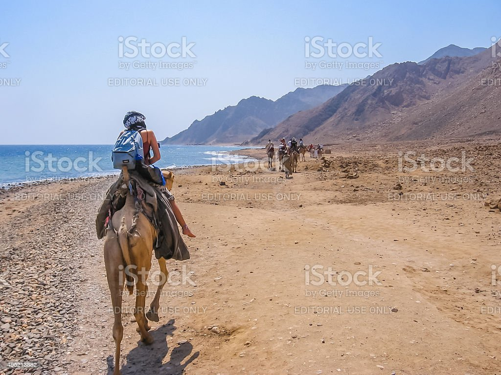 Tourist on camels in Egypt stock photo