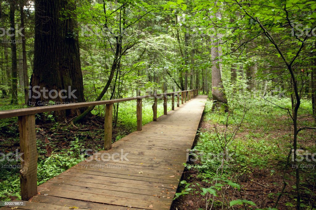 tourist path in forest foto de stock royalty-free