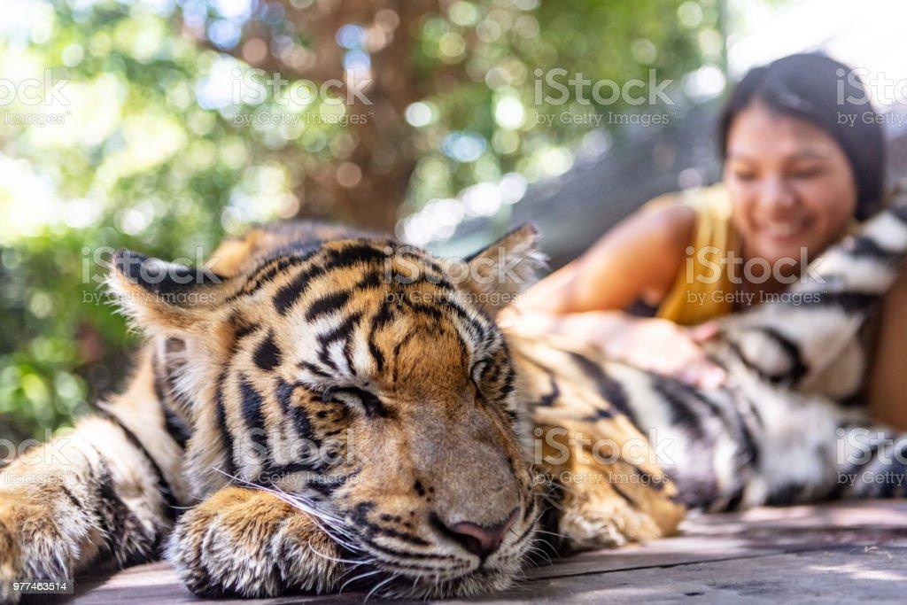 Touristischen Petting tigerbaby – Foto