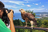A tourist snapping a photo of a baby sea eagle in Phuket, Thailand.
