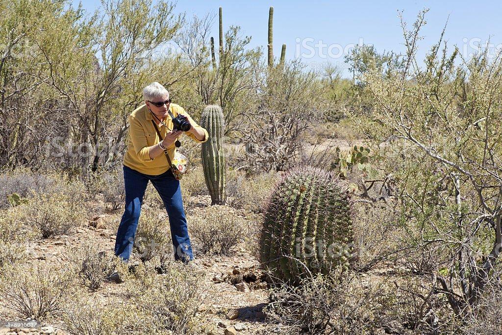 Tourist photographs a barrel cactus royalty-free stock photo