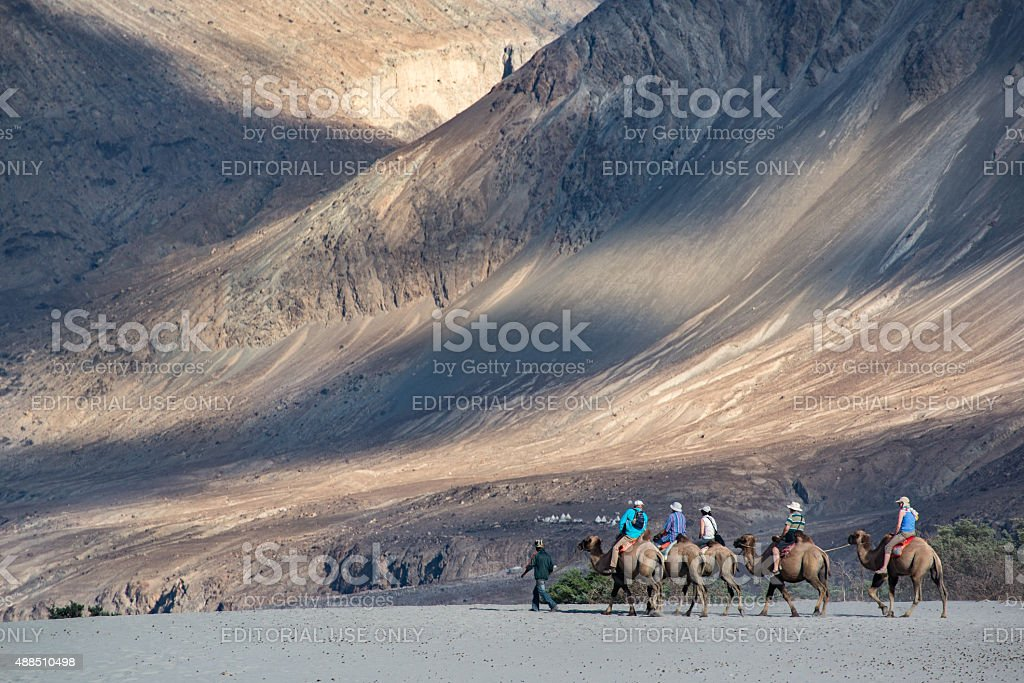 Tourist ride carmels at Hunder village in Nubra Valley, stock photo