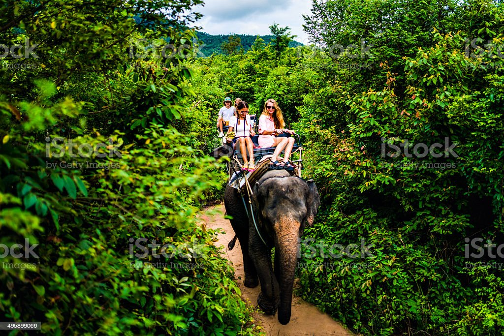 Tourist safari elephant trekking stock photo