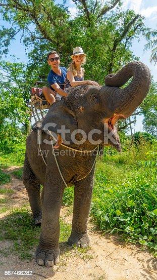 Tourist safari elephant trekking