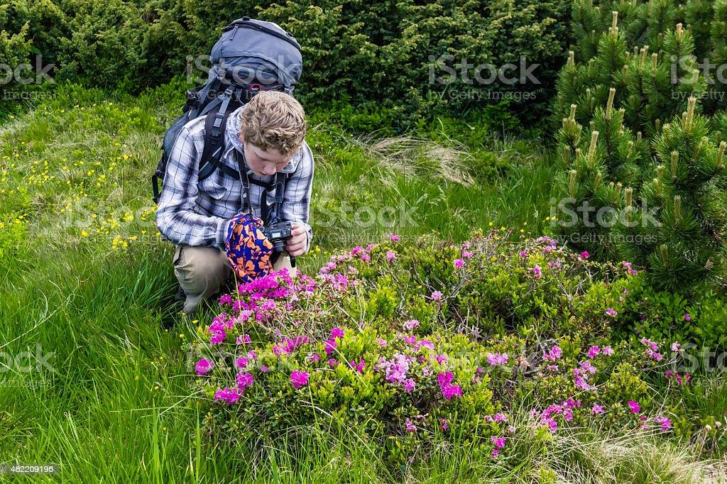 Tourist takes photos of rhododendron stock photo