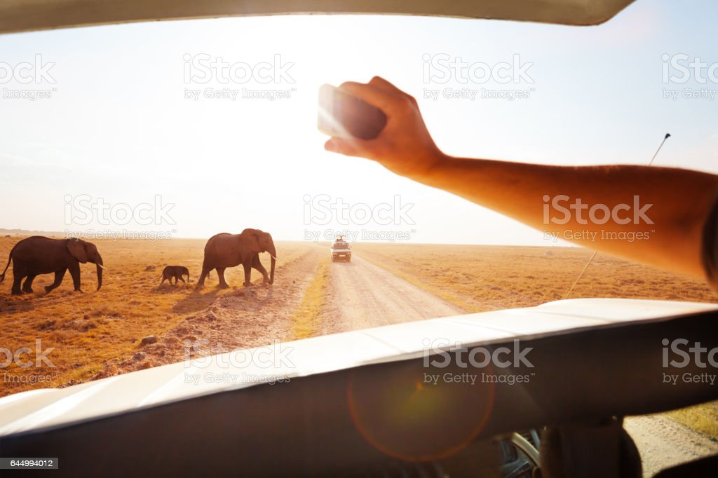 Tourist taking photo of elephants crossing road stock photo