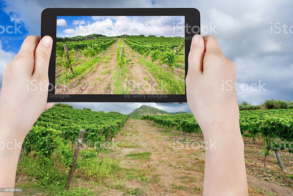 tourist taking photo of vineyard under clouds stock photo