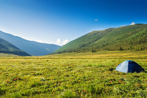 tourist tent on mountain meadow field dawn sunrise - altai nature reserve стоковые фото и изображения