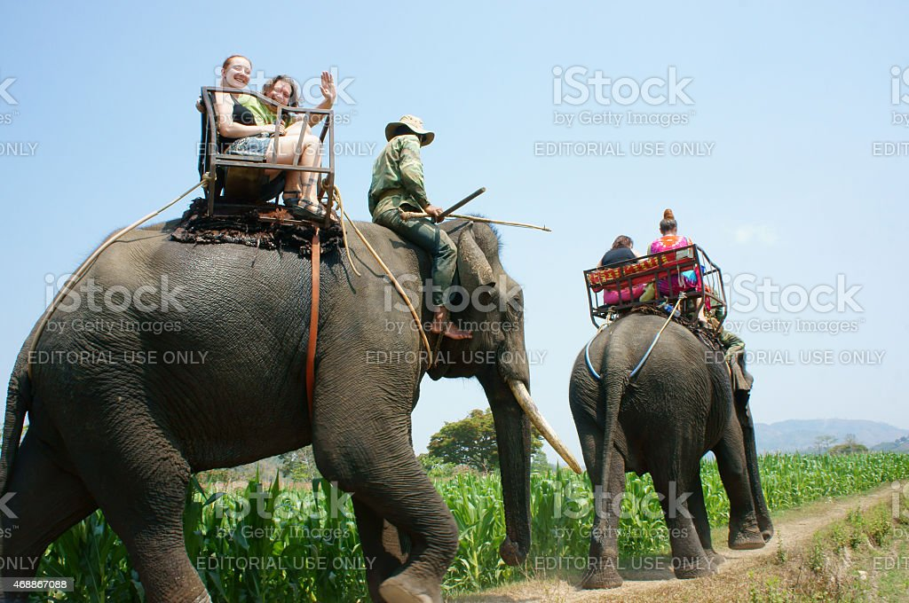 tourist traveling Vietnamese countryside, ride elephant stock photo