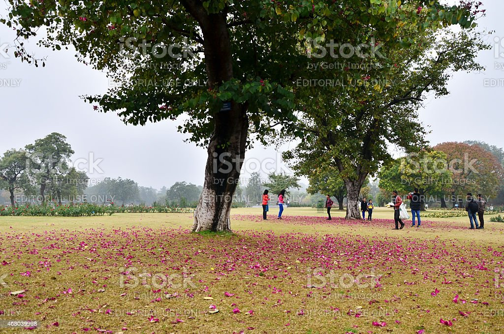 Tourist visit Zakir Hussain Rose Garden in Chandigarh, India. stock photo