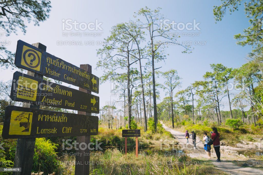 Tourist walking in forest on 27 february 2016 in Phu Kradung, Thailand. royalty-free stock photo